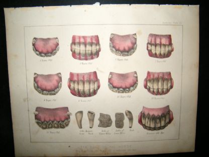 Miles Practical Farriery C1875 Hand Col Print. Teeth Ages of the Horse | Albion Prints